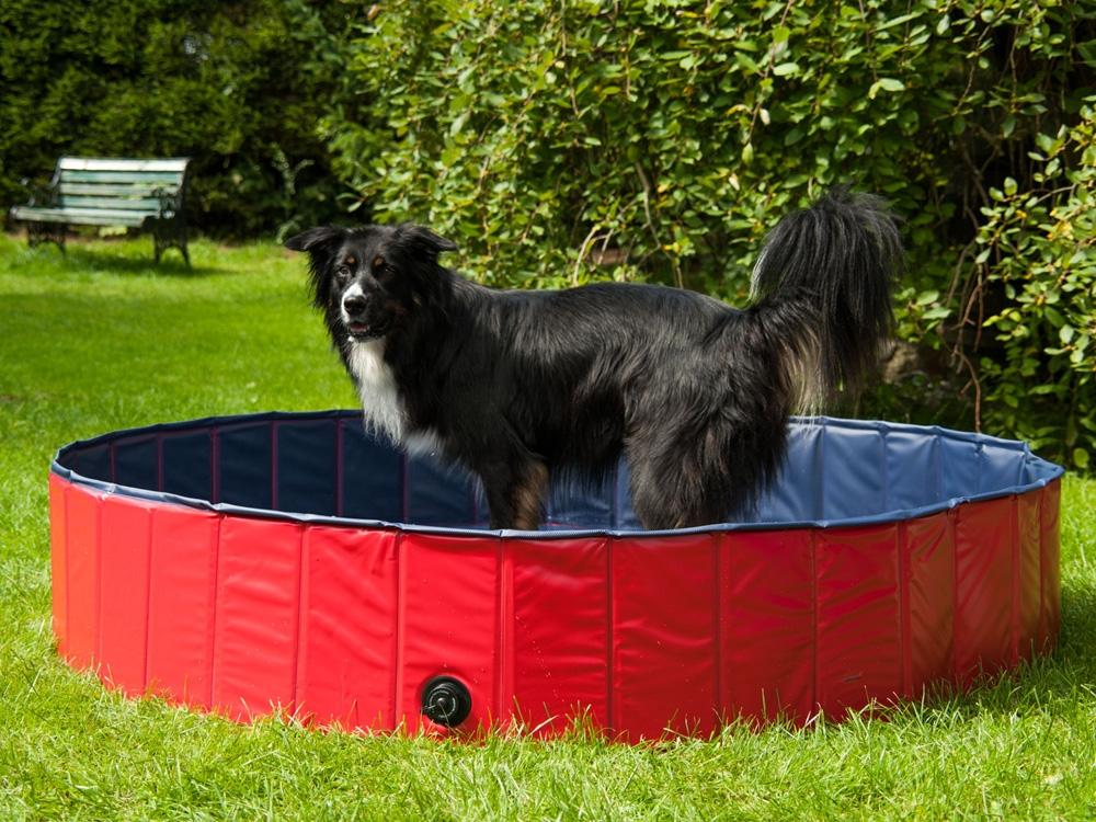 Hundepool Schwimmbecken für Hunde