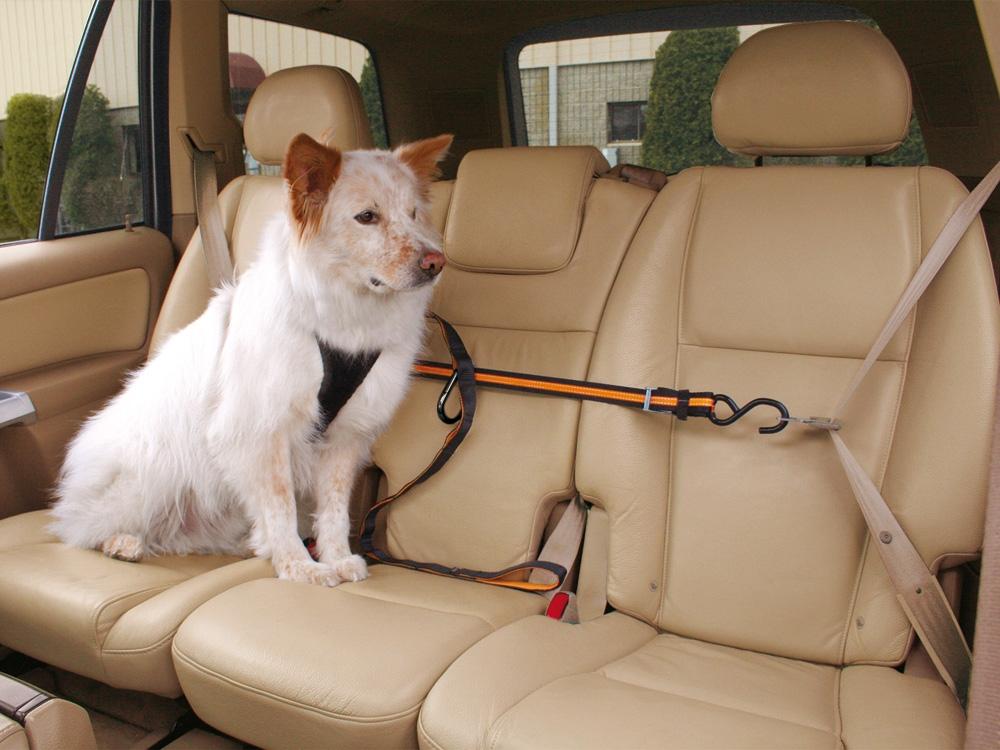 Kurgo Leash Zip Line Rückhaltesystem für Hunde