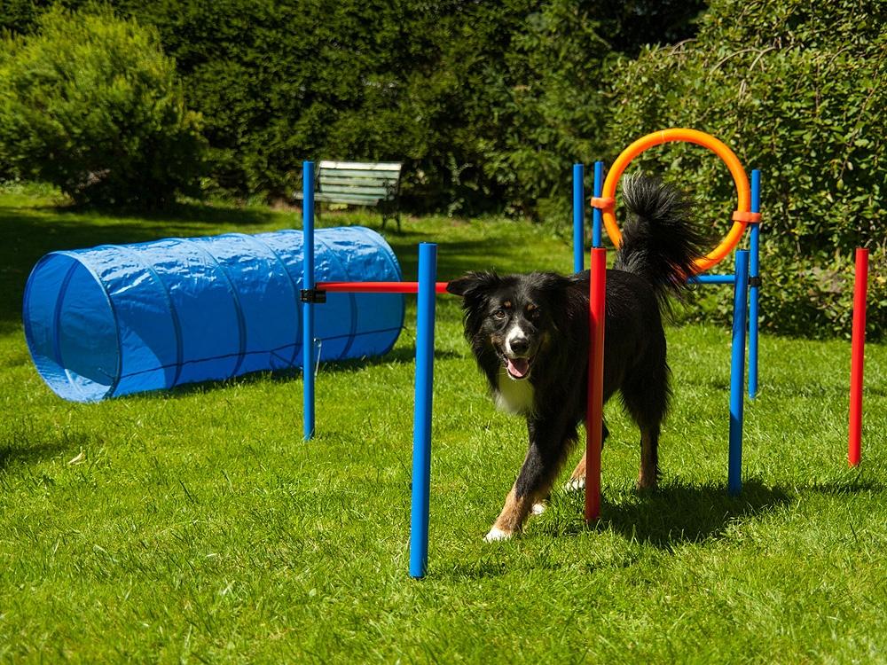 Dog Agility Set Champion