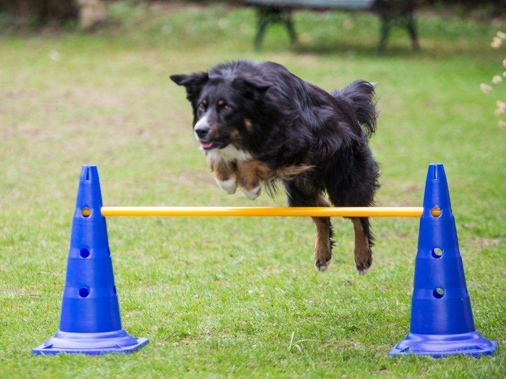Dog Agility Pylonenhürde Kegelhürde 51 cm