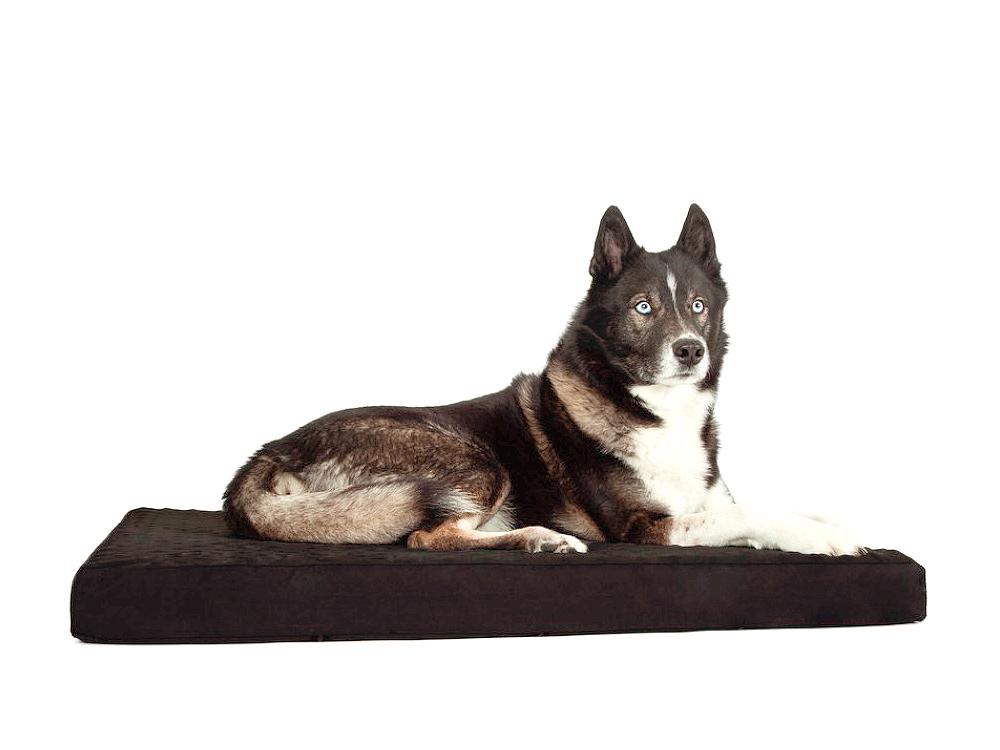 Back on Track orthopädische Hundematratze