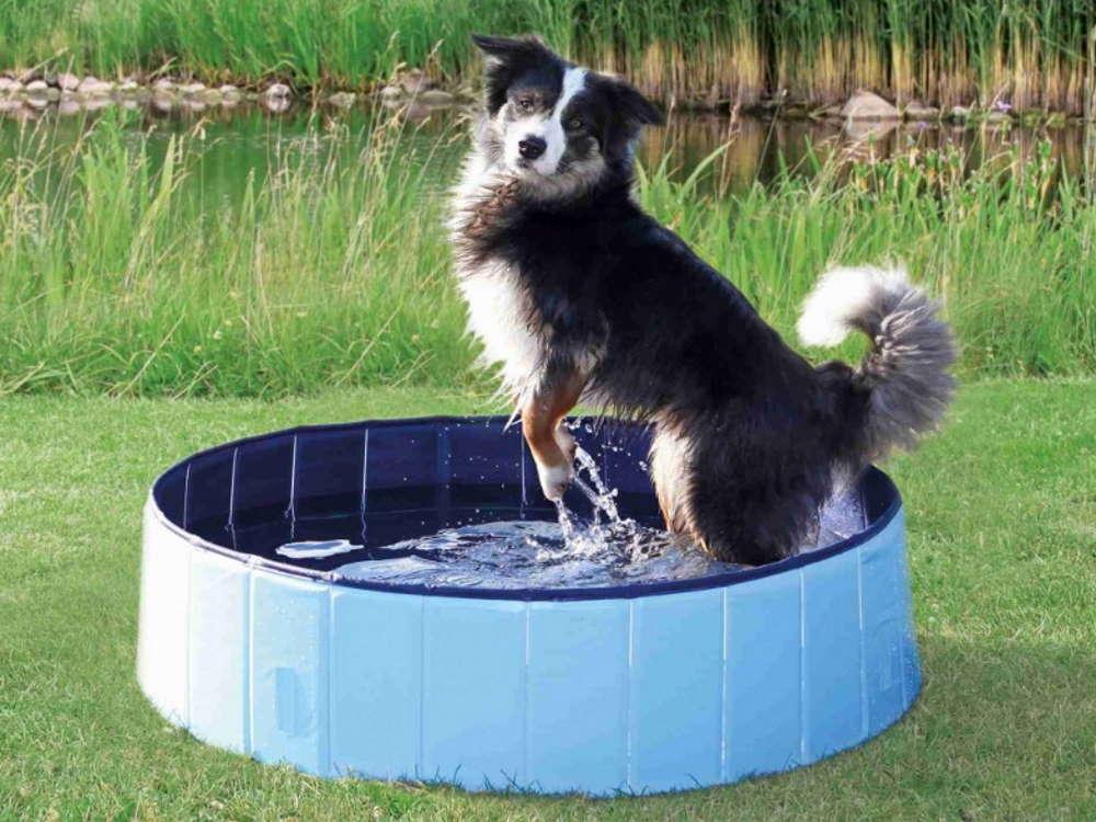Hundepool Plantschbecken für Hunde