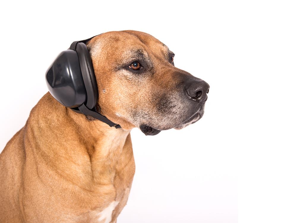 Gehörschutz Hund Größe XS schwarz Lärmschutz Silvester Jagd Gewitter usw