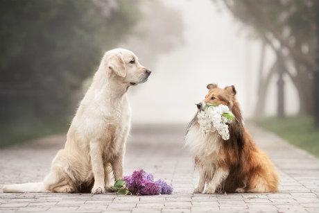 Hundebedarf Neuheiten
