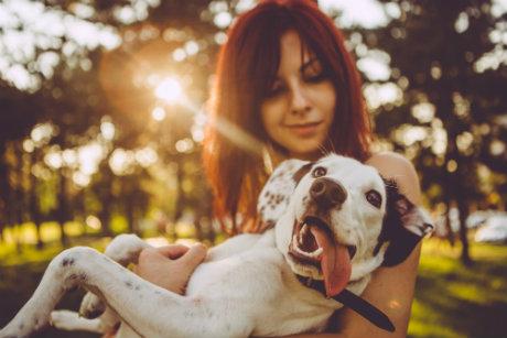 Neuheiten für Hundehalter