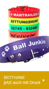Hundehalsband - jetzt mit neuem Halsband-Checker