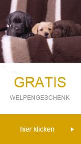 Welpenzubehör und Welpenbedarf günstig kaufen - hundeshop.de