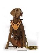 Diensthunde » Hundezubehör