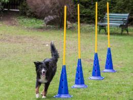 Dog Agility Slalomstange mit Stand-Pylone