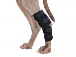 Back on Track Hundesprunggelenkschoner Paar mit Klettverschluss
