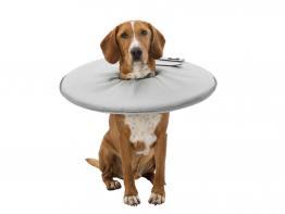 Schutzkragen für Hunde