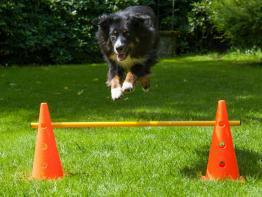 Dog Agility Pylonenhürde Kegelhürde 38 cm